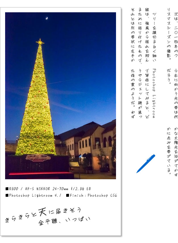 20160201-tree.jpg
